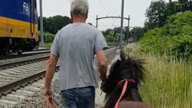 Politie vangt ontsnapte pony naast spoorlijn Breda