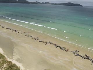 Meeste dolfijnen al dood voordat reddingswerkers arriveerden