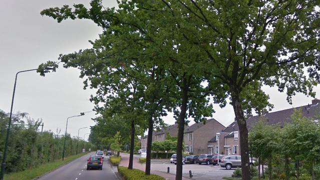 Gemeente Etten-Leur kapt vijftig eikenbomen aan Liesbosweg
