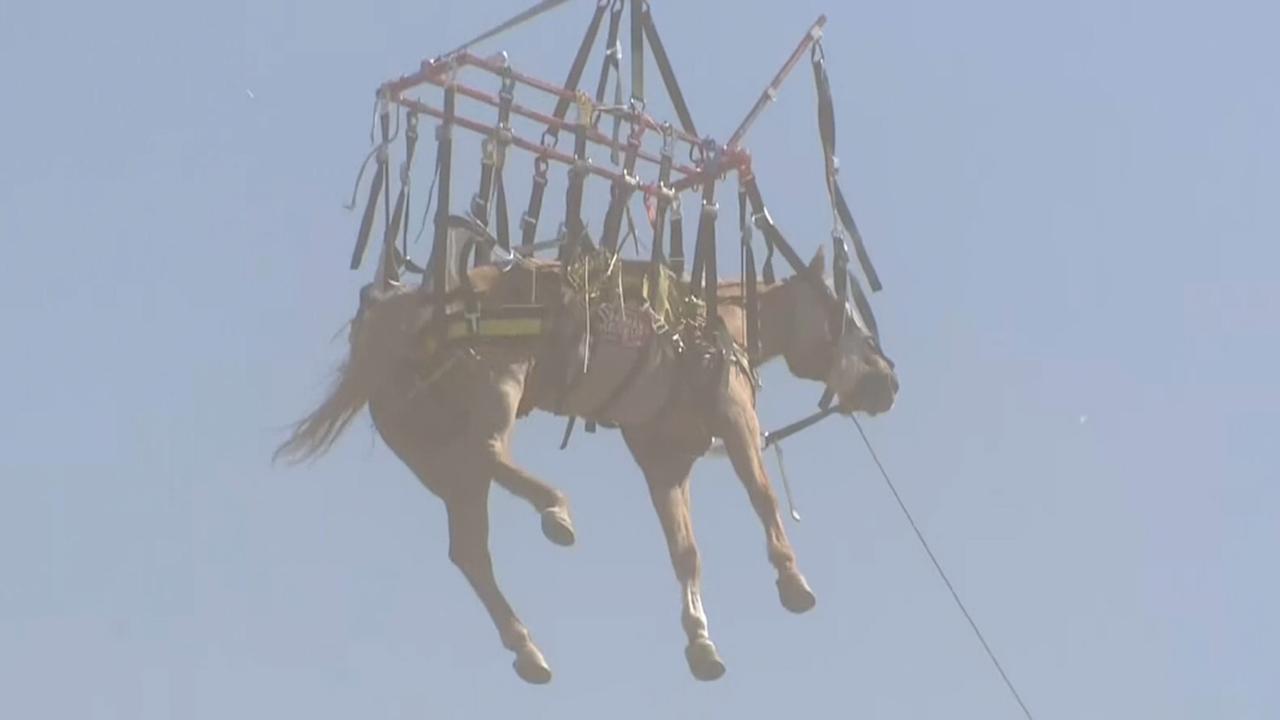 Helikopter redt paard uit ravijn vlak bij Los Angeles