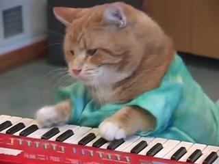 Muziekclips met rossige viervoeter tientallen miljoenen keren gedeeld