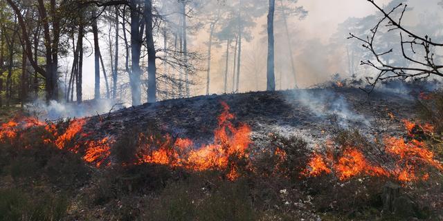 Grote natuurbrand in Soester Duinen na uren onder controle
