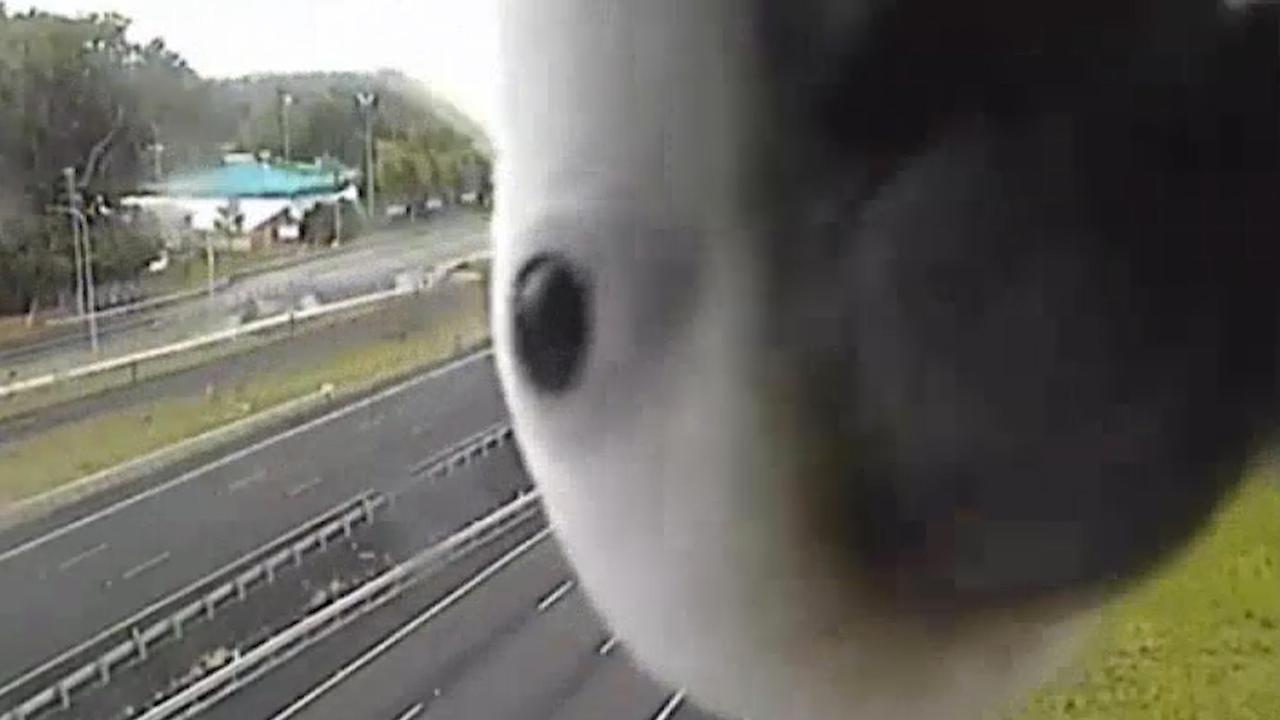Nieuwsgierige kaketoe bekijkt verkeerscamera in Australië