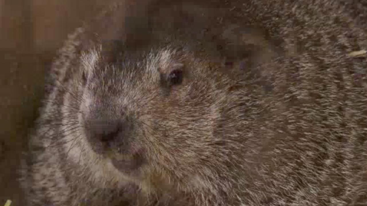 Dit moet u weten over het Amerikaanse feest Groundhog Day