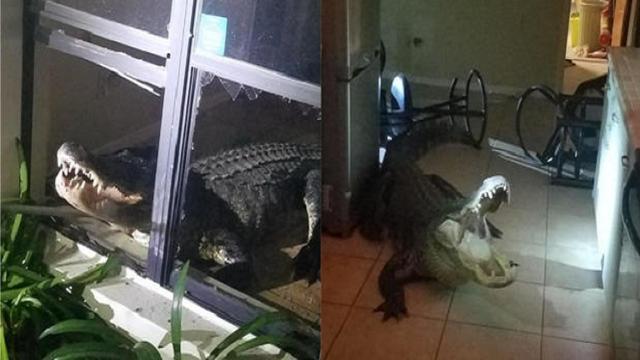 3,5 meter lange alligator 'breekt in' in huis van Amerikaanse familie
