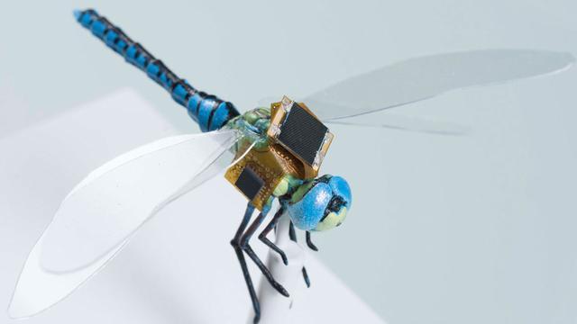 Wetenschappers werken aan genetisch aangepaste cyborglibellen
