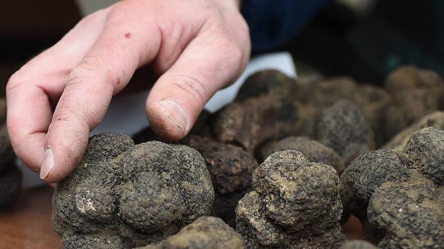 Australische boer vindt zwarte truffel van 1,5 kilo