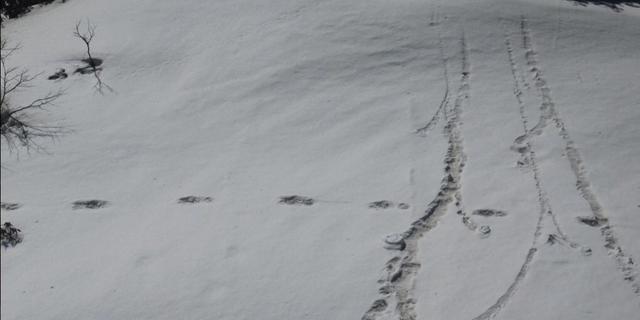 Indiaas leger stelt voetafdruk van mythische yeti gevonden te hebben