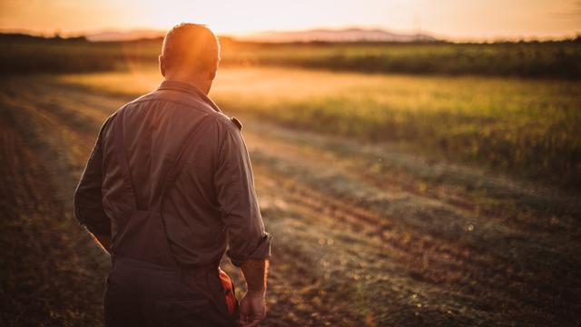 'Ruim helft boeren vreest voortbestaan bedrijf na stikstofuitspraak RvS'