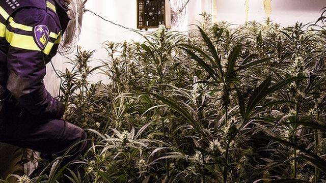 Vorig jaar zeker 1.250 panden gesloten na drugsvondst