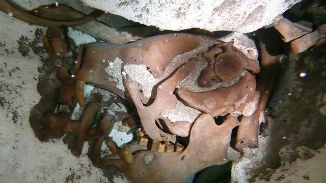 Resten van unieke reuzenluiaard opgegraven in Mexico