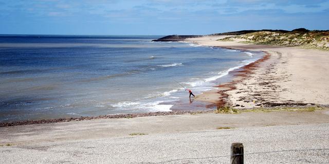 Strand in Kattendijke afgezet om broedplaats bontbekplevieren te beschermen