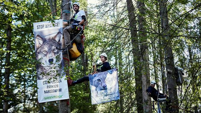 Hof dreigt Polen met boete van 100.000 euro per dag om kappen oerbos