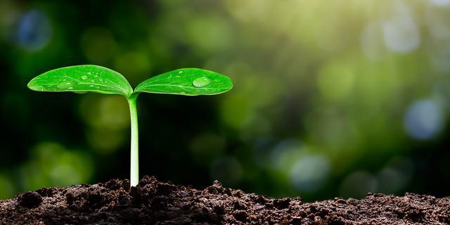 Duurzame projecten hebben 'nu even geen prioriteit'