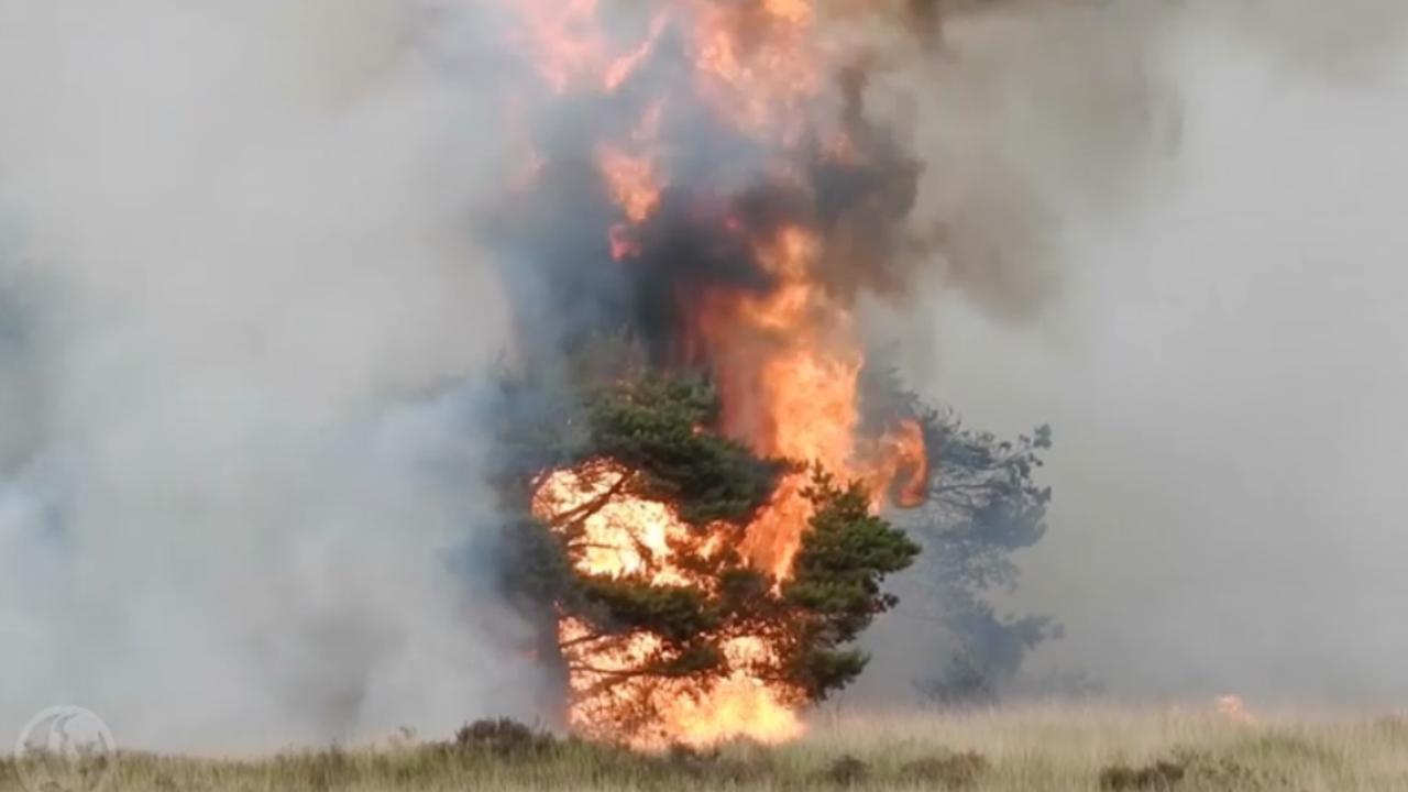 Natuurbrand bij Valkenswaard verwoest zestig hectare grond