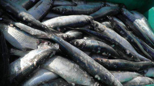 Minder pijn bij vissen door verdovingsmachine