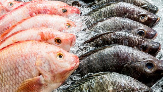Hoe herken je een verse vis? 'Hij moet niet naar vis ruiken'