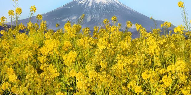 Fuji-tentoonstelling SieboldHuis wegens succes verlengd