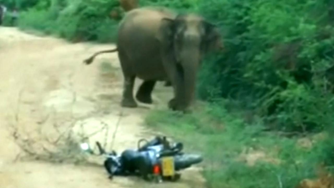 Sri Lankaanse moederolifant in paniek nadat baby in gat valt