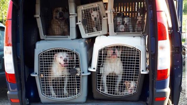 Politie treft 47 verwaarloosde honden aan in bedrijfspand Hof van Twente