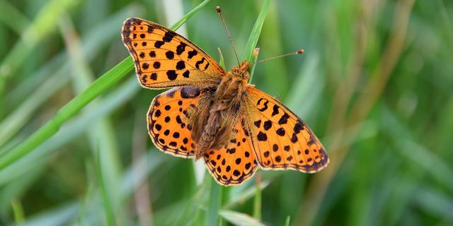 Dit kun je zelf doen om insectensterfte te voorkomen