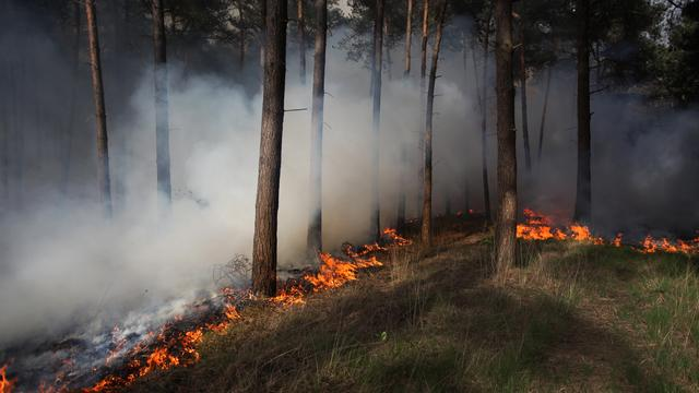 Zestienjarige jongen opgepakt voor natuurbrand Chaam