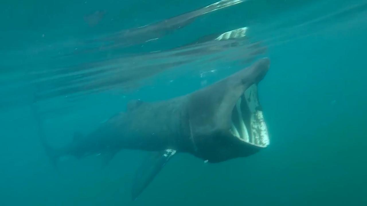 Kajakker komt reuzenhaai tegen bij Ierse kust