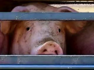 'Exacte aantal keurslagers met vlees uit Vlaams abattoir op dit moment onbekend'