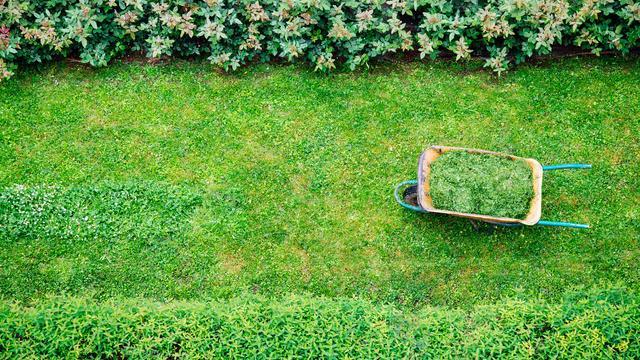 Omdat het gras uit de grond schiet: Stappenplan voor een strak gazon