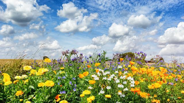 Wat er wordt gedaan om het platteland weer in bloei te zetten