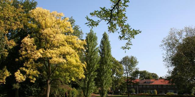 Onderzoek HvA: Gevoelstemperatuur Haarlem 2 graden lager met meer bomen