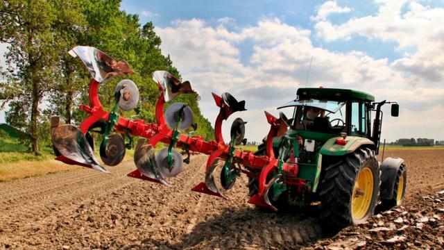 Oogst tarwe dit jaar ruim een vijfde lager