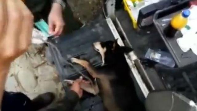 Colombiaanse agenten redden speurhond uit rivier