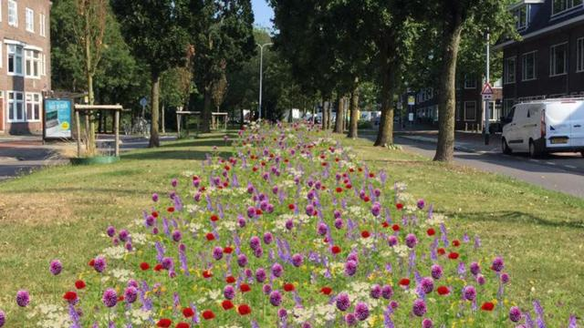 2 meter breed bijenlint geplaatst bij Prinsesseweg en Nassauplein