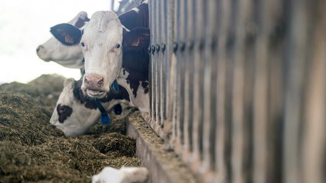 'Rabobank en ABN Amro terughoudend met leningen melkveehouders'