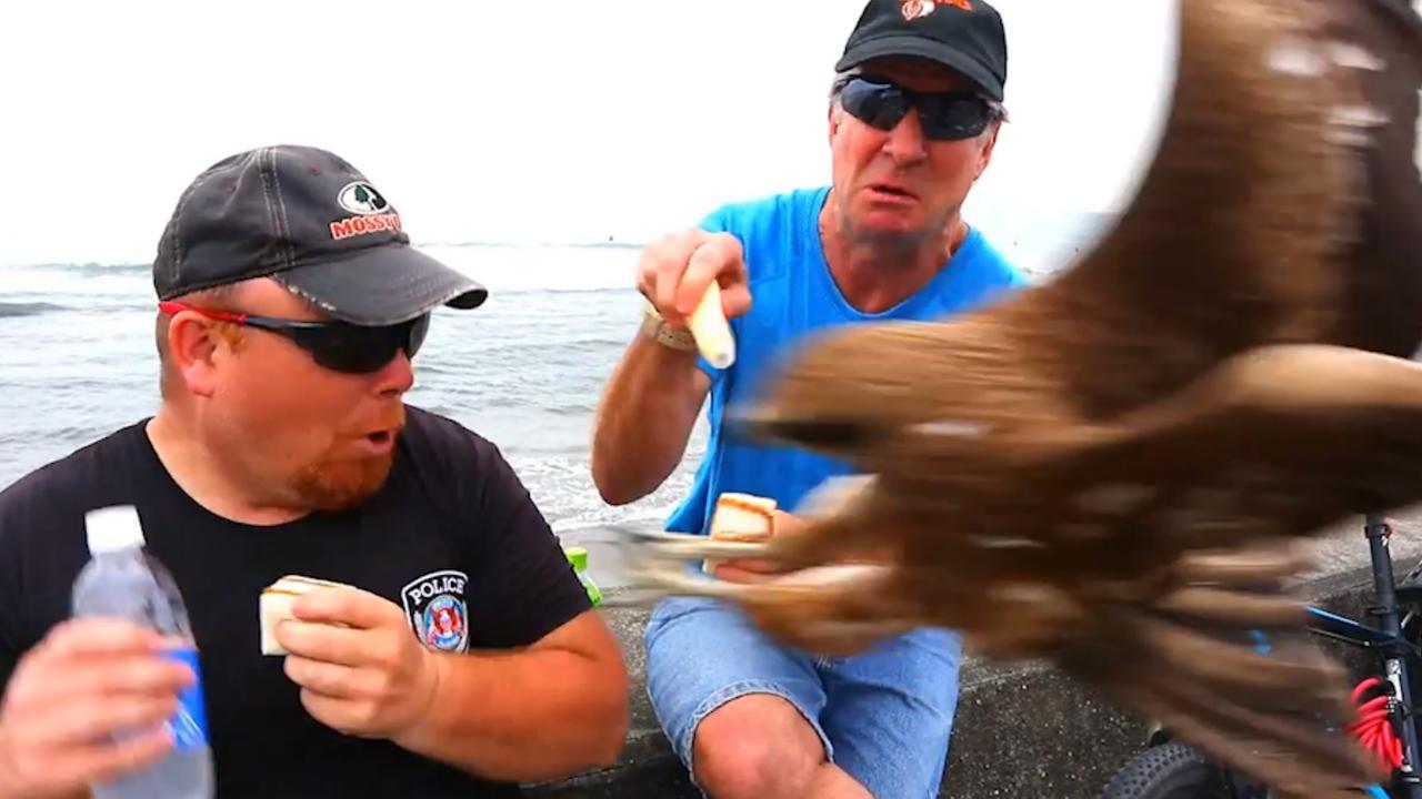 Valk grijpt eten uit handen van toeristen in Japan