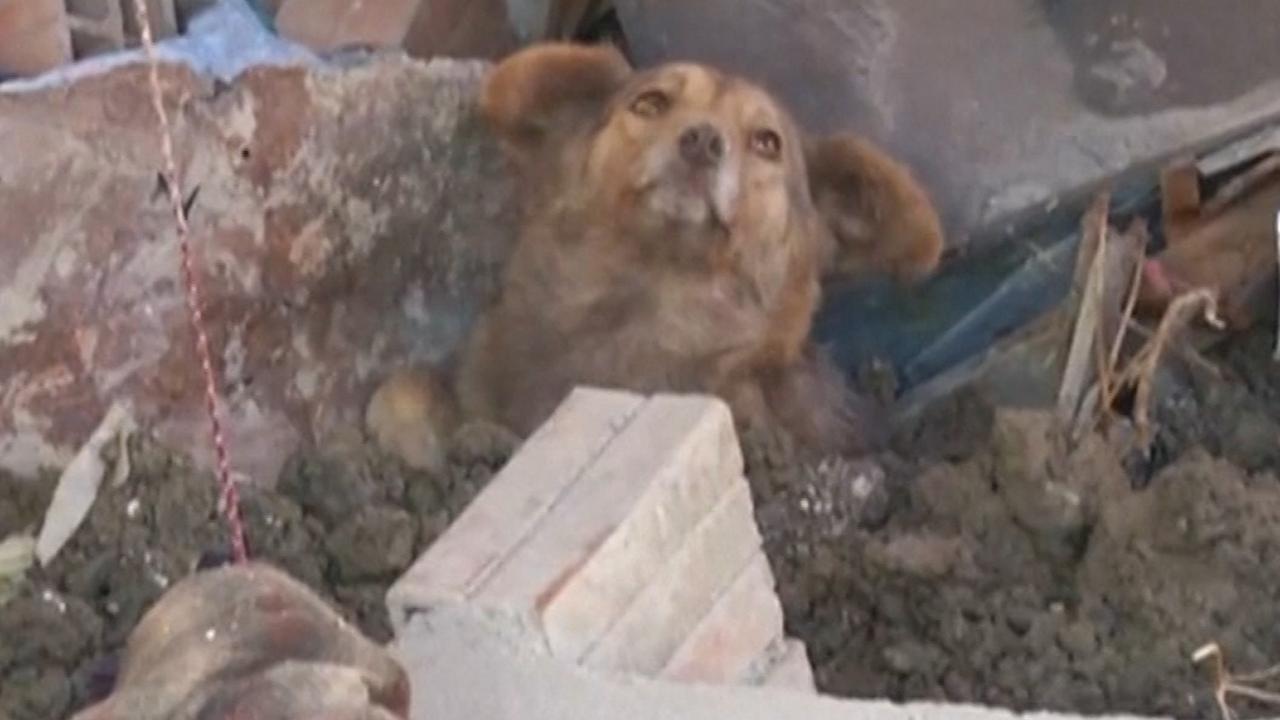 Huisdieren gered uit puin na aardverschuiving in Bolivia