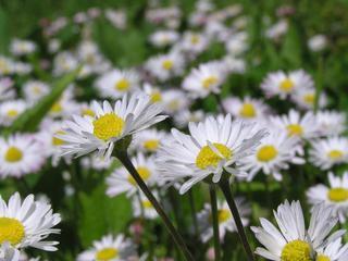 Meer bloeiende planten gevonden dan vorig jaar door warme periode