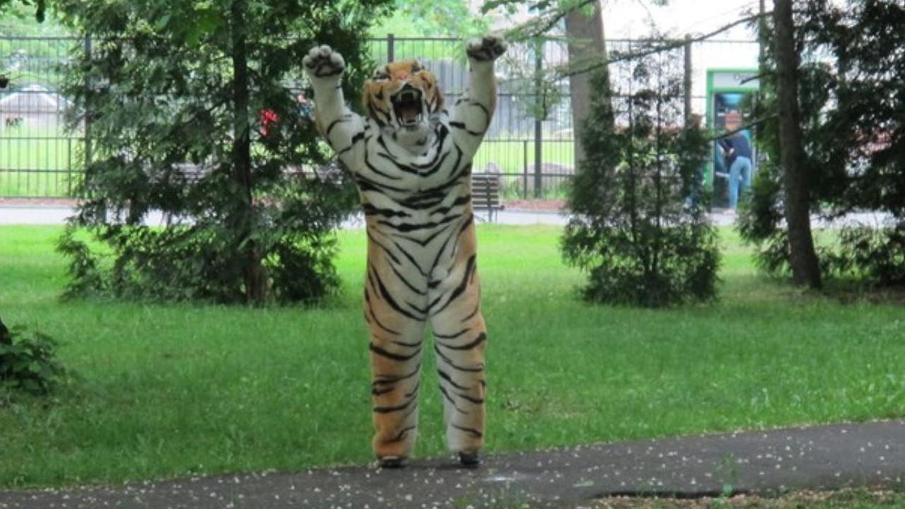 Russische dierentuin oefent met ontsnappingen dieren in tijgerkostuum
