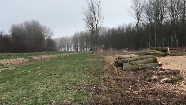 Bewoners Stevenshof eisen opschorten bomenkap Rijnlandroute