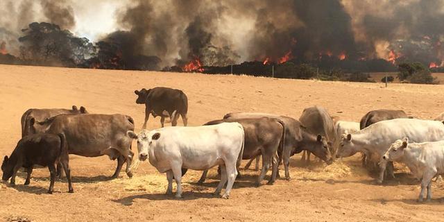 Aangestoken en blusbaar: zes misverstanden over de Australische branden