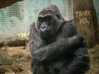 Colo overlijdt op 60-jarige leeftijd