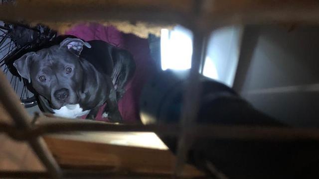Politie vindt hond zonder eten en drinken in kelderbox Pendrecht