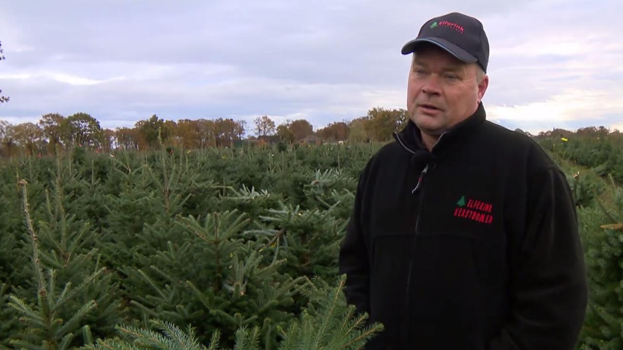 Vandalen slopen 500 kerstbomen, kweker is radeloos