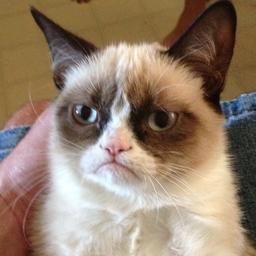 Internetfenomeen 'Grumpy Cat' (7) overleden aan blaasontsteking