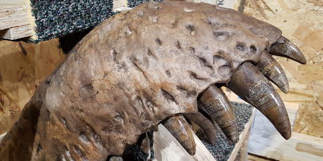 Drukte in Naturalis voor fossiel van T-rex