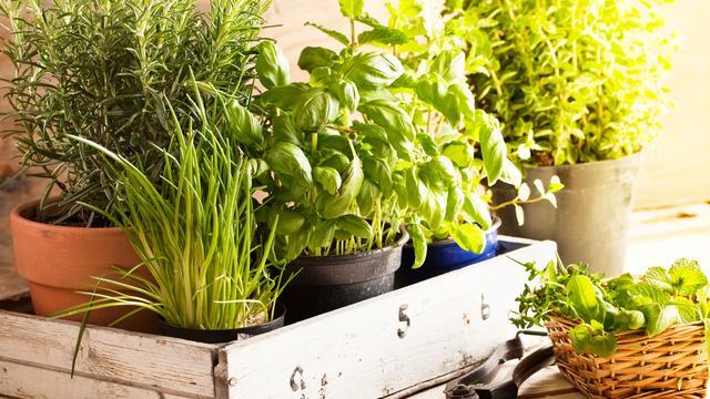 Kruidenplantjes uit de supermarkt gaan snel dood, dat ligt niet aan jou