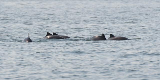 Goed nieuws: Meer bruinvissen in Noordzee   Puppy gered uit bek alligator