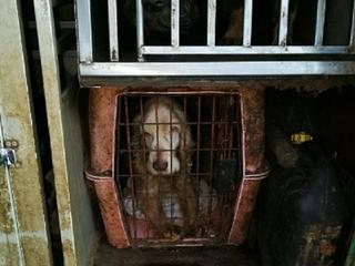 Vermagerde dieren zaten opgesloten in transportboxen