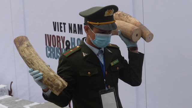 'Vietnam moet harder optreden tegen illegale ivoorhandel'